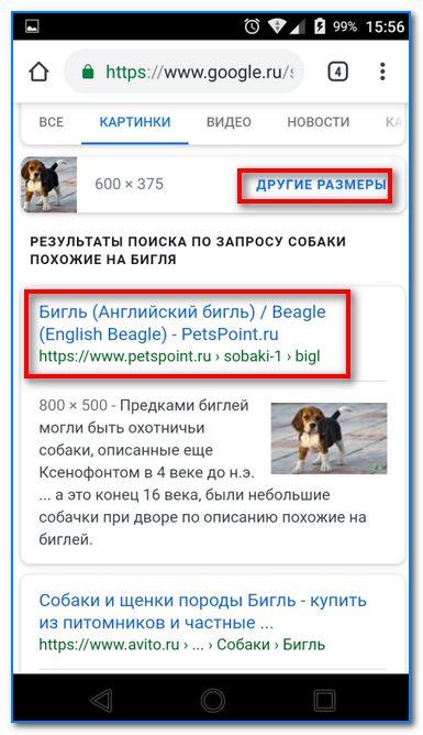 Английский Бигль (Гугл нашел породу собаки)