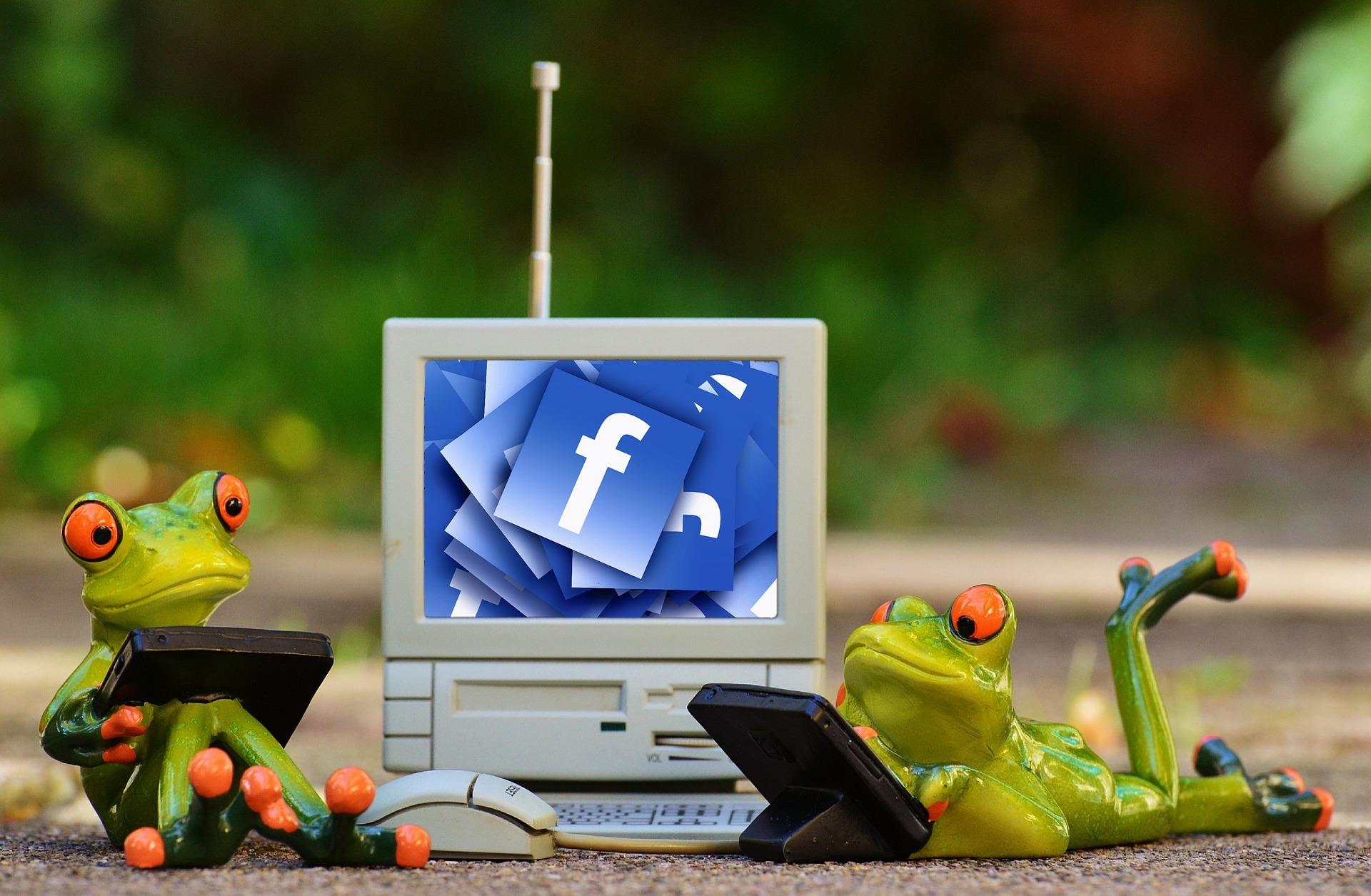 Лягушки тоже подключились к сети Интернет