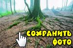 sohranit-foto