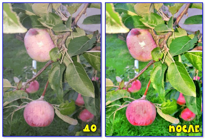Яблоки в саду (До и после)