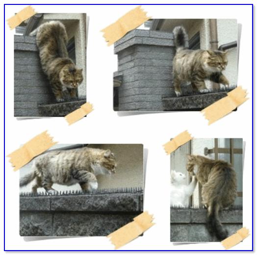 Фотоколлаж с приключениями кота Васьки / пример