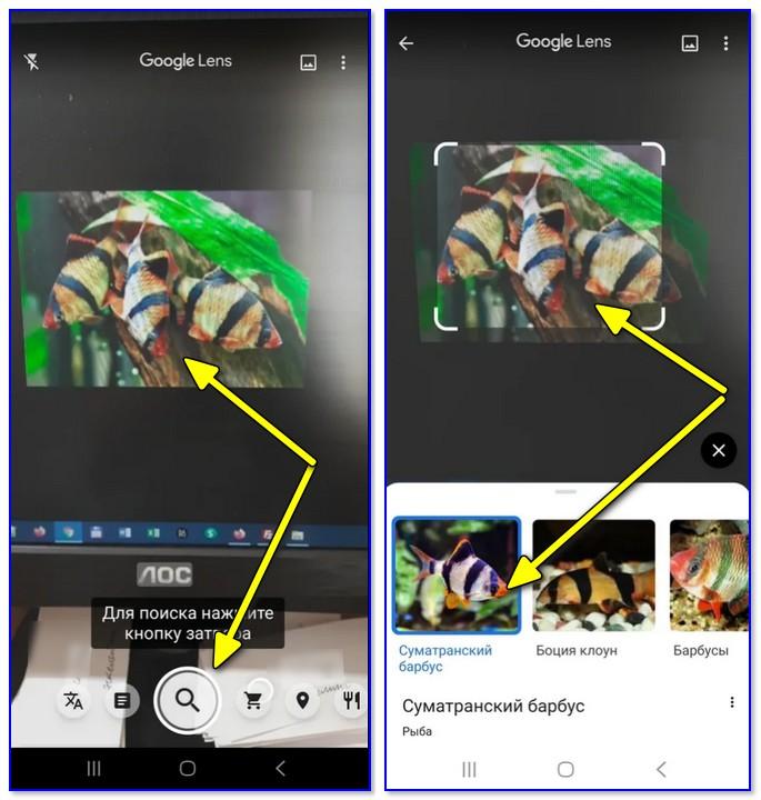 Google Lens — определил что за рыба на экране!