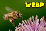 WEBP - как открыть в Windows